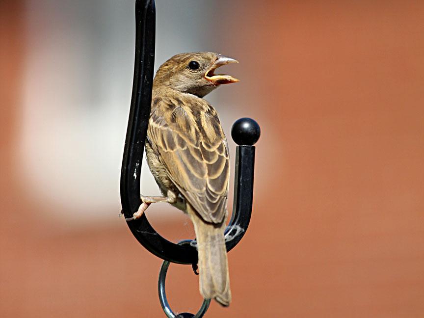 sunnybird1web