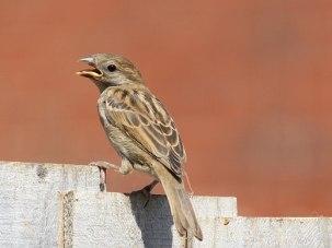 sunnybird2web
