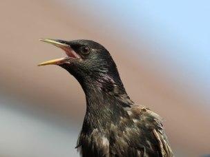 sunnybird4web