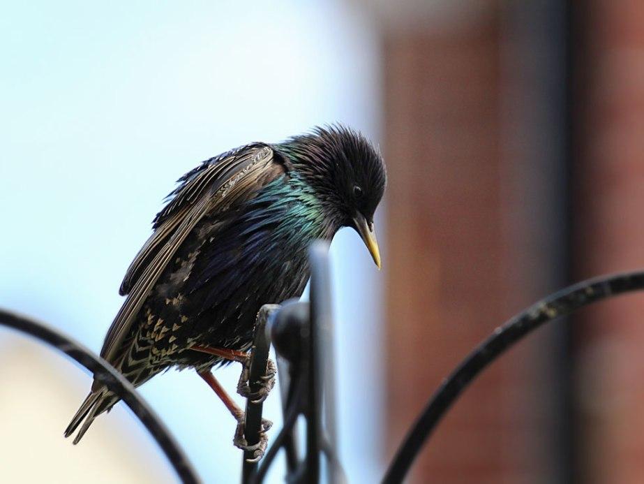 birdtues1web
