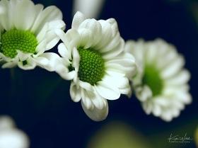 flower4sig