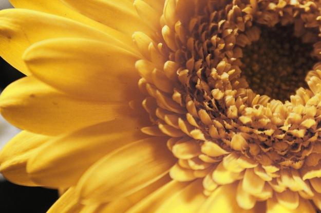 flowerinstagram