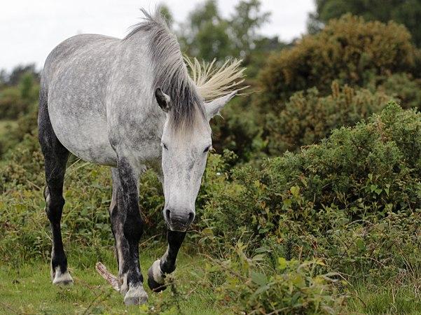 horse1sundayweb