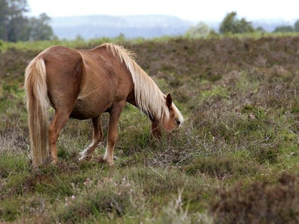 horse3sundayweb