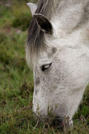 horse4sundayweb