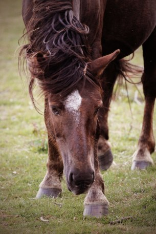 horse5sundayweb