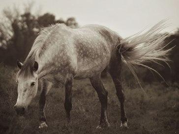 horse7sundayweb