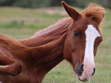 horse8sundayweb