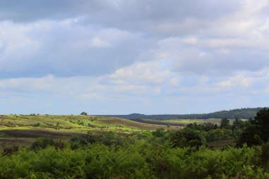 landscapesundayweb
