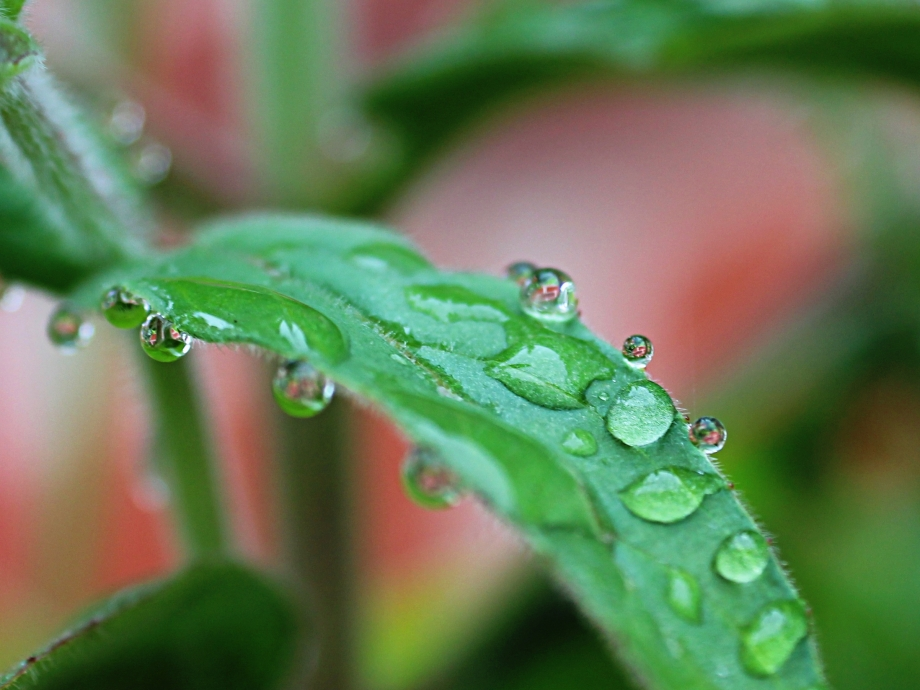 leafwatermacro