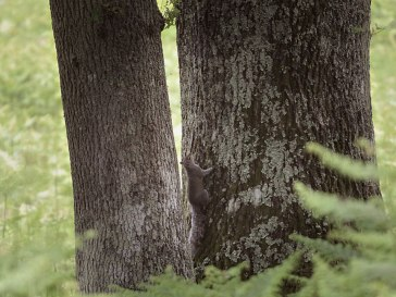 squirrelsundayweb