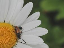 bugs8